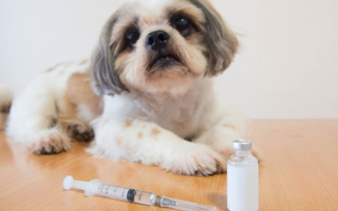 반려견 항암제·치매약부터 CT·감정번역기까지…반려동물 '삶의 질' 高高